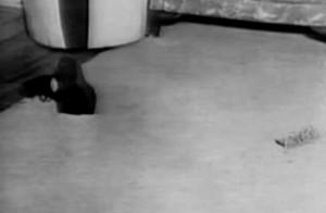 Schuh und Brille von Evelyn Hartley im Wohnzimmer
